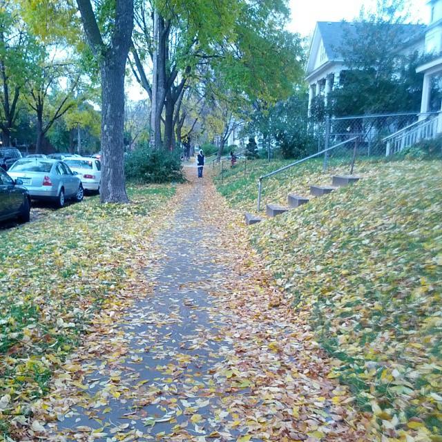Walk of leaves