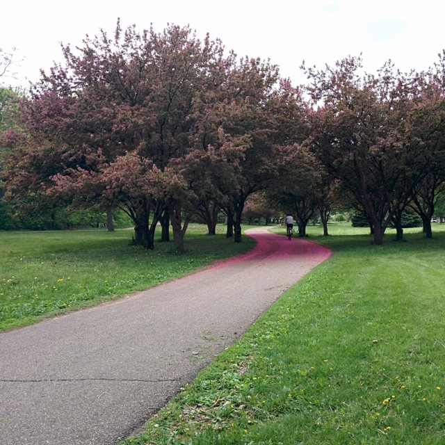 Paths of green and pink