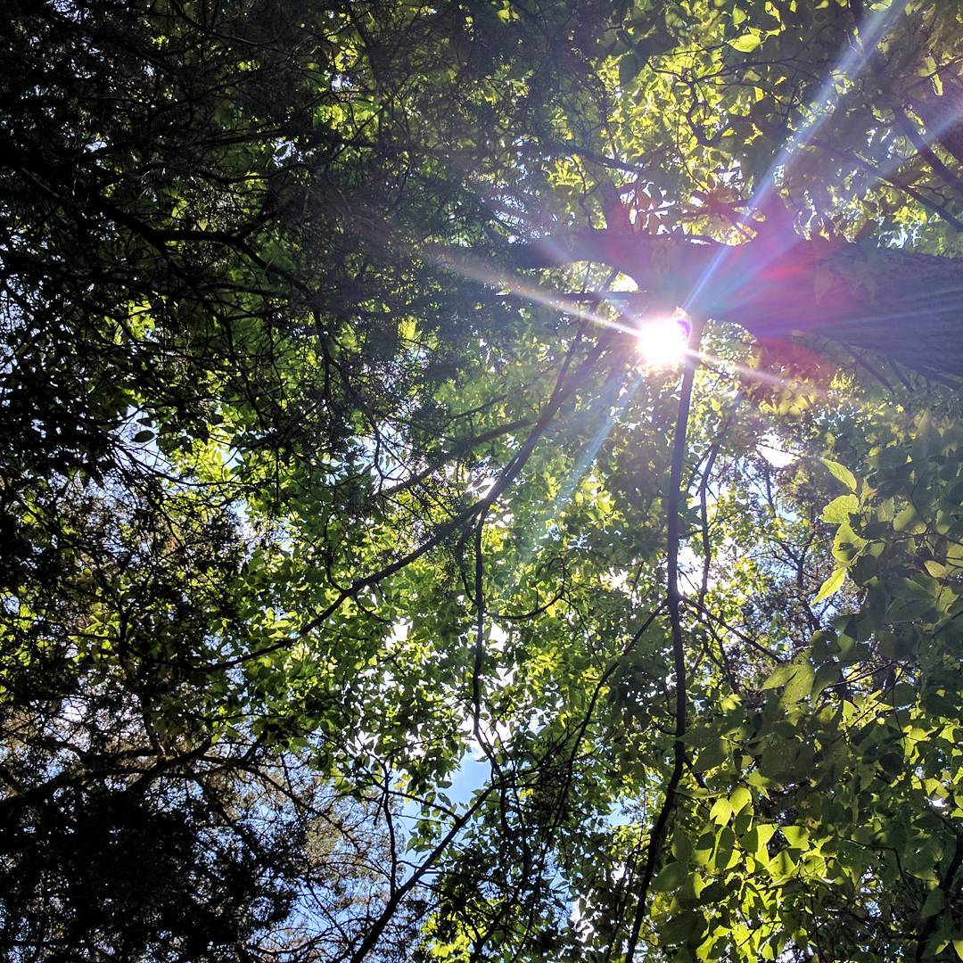 What I saw from a hammock